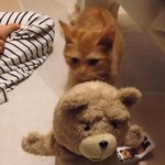 テッドの人形と闘う茶トラ猫ちゃん