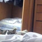 ベッド陰からそっと顔を出してのぞくネコちゃんの顔が可愛すぎる♪
