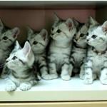 戸棚に入った子猫ちゃんがキョロキョロ