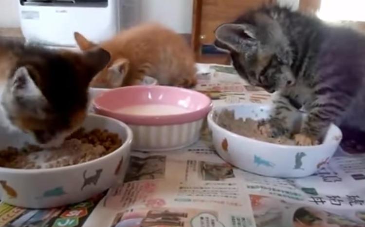 食べてる途中で眠くなってしまった子猫♪zzz