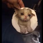 浮き輪をつけてプカプカする子猫ちゃん