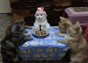 猫の誕生日会がなんだか怪しい儀式にしか見えない(´・ω・`)