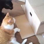 「一人にさせて・・・」ダンボールのふたを閉める猫ちゃん