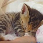 寝ている子猫だけを集めた総集編動画の破壊力が凄い♪
