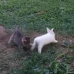 追いかけっこをして遊ぶ子ウサギと子ネコちゃん