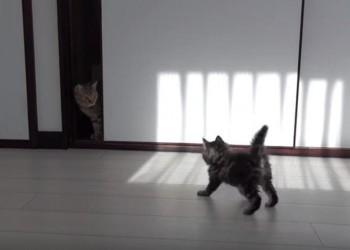9匹のネコと初対面をした子猫ちゃん「こんにちは!」っと挨拶をする