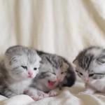 母猫を「ミャ~ミャ~」っとないて呼ぶ赤ちゃん猫達