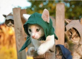 4匹の子猫は、暗殺者