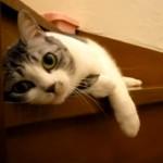 「おかえりニャ」玄関前の階段でゴロゴロしながらお出迎え♪