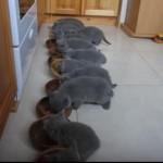 12匹の子猫が並んで食事を食べる光景が圧巻🎵