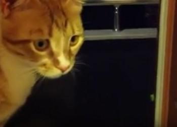 カメムシの匂いを嗅いでしまった猫さんの反応(^◇^)