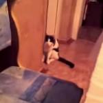 瞬間移動!?もの凄い速さで近づくネコ