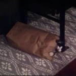 【7秒】人が通ると隠れて、通り過ぎると顔を出すネコちゃん