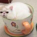 大きなティーカップに入った猫さんを、どうぞ召し上がれ♪