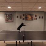 卓球のラリーに参加する猫さんが大ハッスル♪