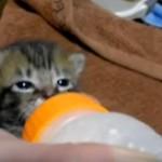 保護された直後の子猫さん