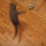 [動画9秒] ネコパンチを超えた?ニャンコの新必殺技がすごい