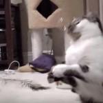 ニャンニャン鳴きながらシャボン玉と戦う猫さん♪