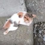 橋の下に落下して、後ろ脚を引きずって歩く子猫を保護、脅威的な回復力をみせる♪