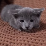 猫じゃらしに集中すると寄り目になるニャンコ(^◇^)