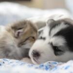 子猫と子犬の仲良し動画集(^◇^)