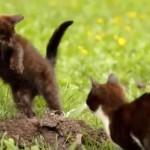 草原の中で、楽しそうにじゃれながら飛び跳ねる二匹の子猫さん