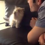 息を吹きかけるとそれを捕まえようとする子猫さんが可愛いすぎる🎵