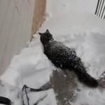 大雪の中、行く手がふさがれるものの、どうしても外にいきたいニャンコが・・・