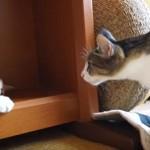 起きるのをジッとまってる猫ちゃん、耐えきれずに・・・