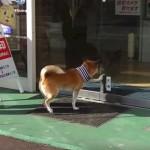これは画期的♪犬専用の自動ドアがあるお店(^◇^)