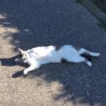 日向ぼっこポイントを探して移動するネコさんと、一緒に遊ぶワンちゃん