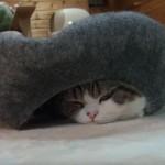 やどかり型のベッドを取り合うネコさん達