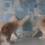 子猫さんのボクシング対決にほっこり(^◇^)
