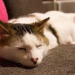 たくさんの猫と暮らす生活♪猫シェアハウスが入居者募集中