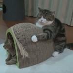 爪とぎを抱えたまま寝るネコちゃん