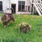 草にまぎれて、待ち伏せして猫を驚かす猫