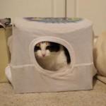 ダンボールとTシャツで簡単に猫ハウスを作る方法♪