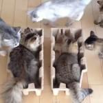 猫が集まる箱が開発された?!