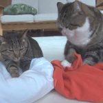 ふみふみして寝床を作る猫ちゃん達、結局寝たのは?