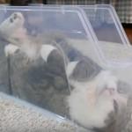 プラスティックのケースの中でくつろぐ猫さん(まるちゃん)