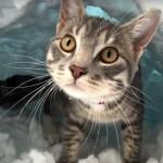 雪を掘って、自分専用のかまくらを作る猫ちゃん(^◇^)