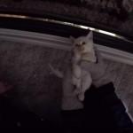 【感動】 心肺が停止し凍ったままの状態で見つかった子猫に奇跡が起きる
