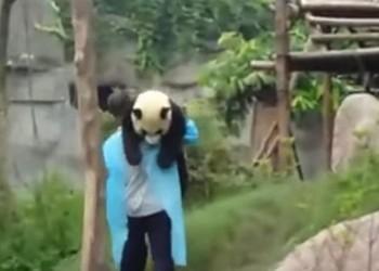 飼育員さんに「抱っこで連れてって♪」と甘える子パンダさん