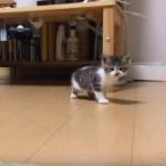 可愛い子猫さん、初めてのおうちに緊張気味♪