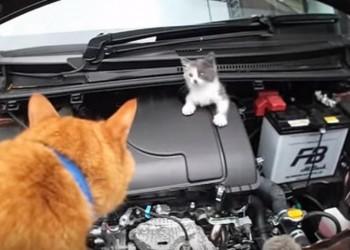 エンジンルームに迷い込んでしまった子猫を茶トラ猫ちゃんの力で保護