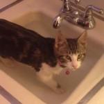 お水が大好きな猫ちゃん、シンクのお風呂で遊ぶ♪