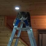 脚立をのっしのっしと登頂する猫ちゃん(まる)、頂きでドヤ顔寝