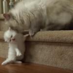 「ママ~助けてニャ~」っと子猫に呼ばれて、助け出す母猫さん(^◇^)