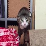 猫ロケット発射(スローモーション)