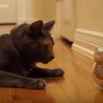 新型ドロイド(BB-8)と仲良くなって遊ぶネコちゃん